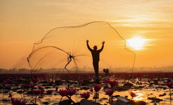 蓮の花の朝
