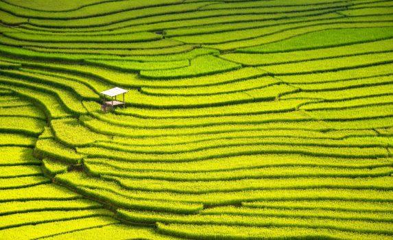 ベトナムの棚田の風景
