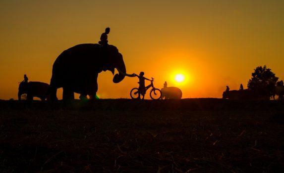 象と子供 タイの風景