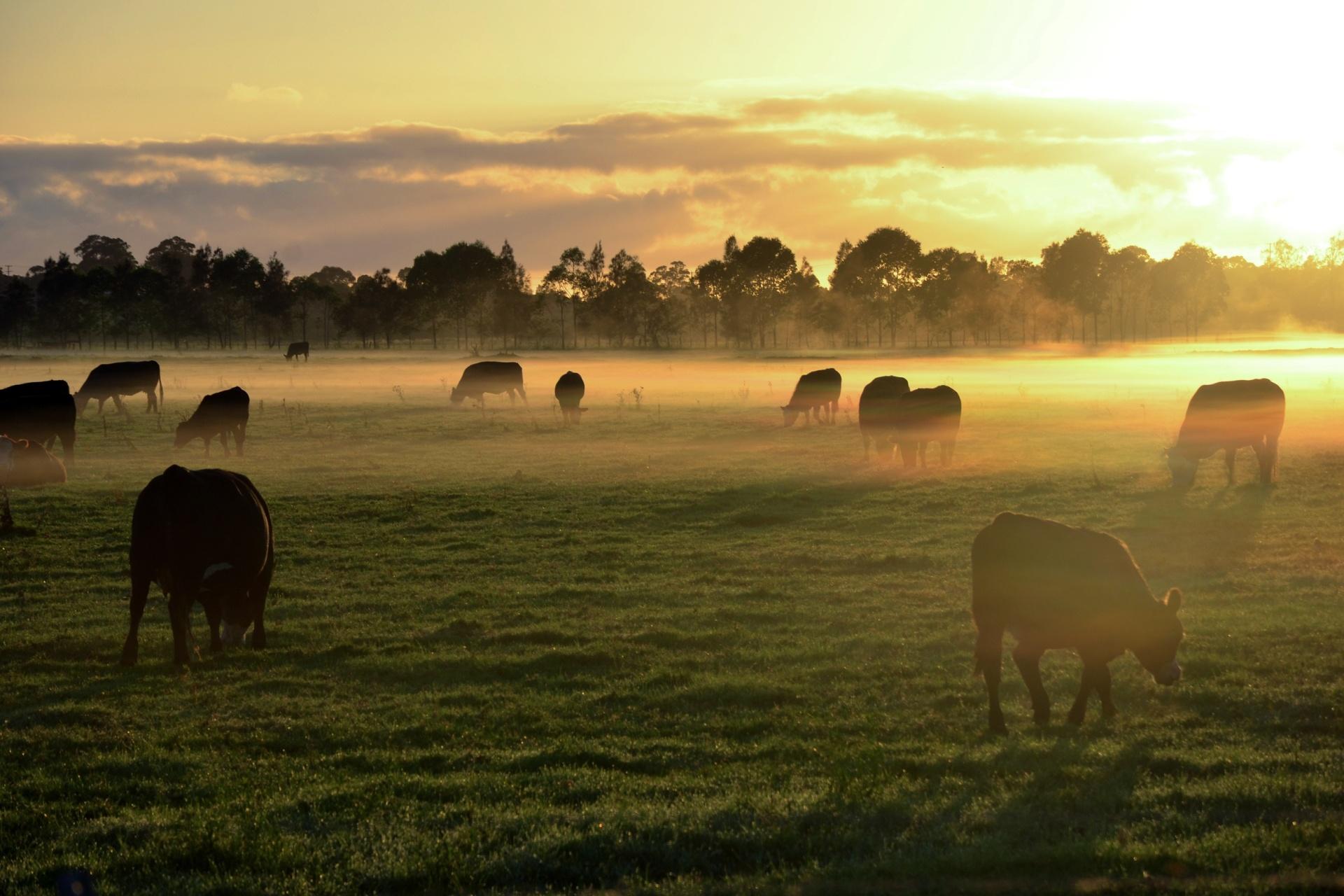 朝霧の牧場の風景