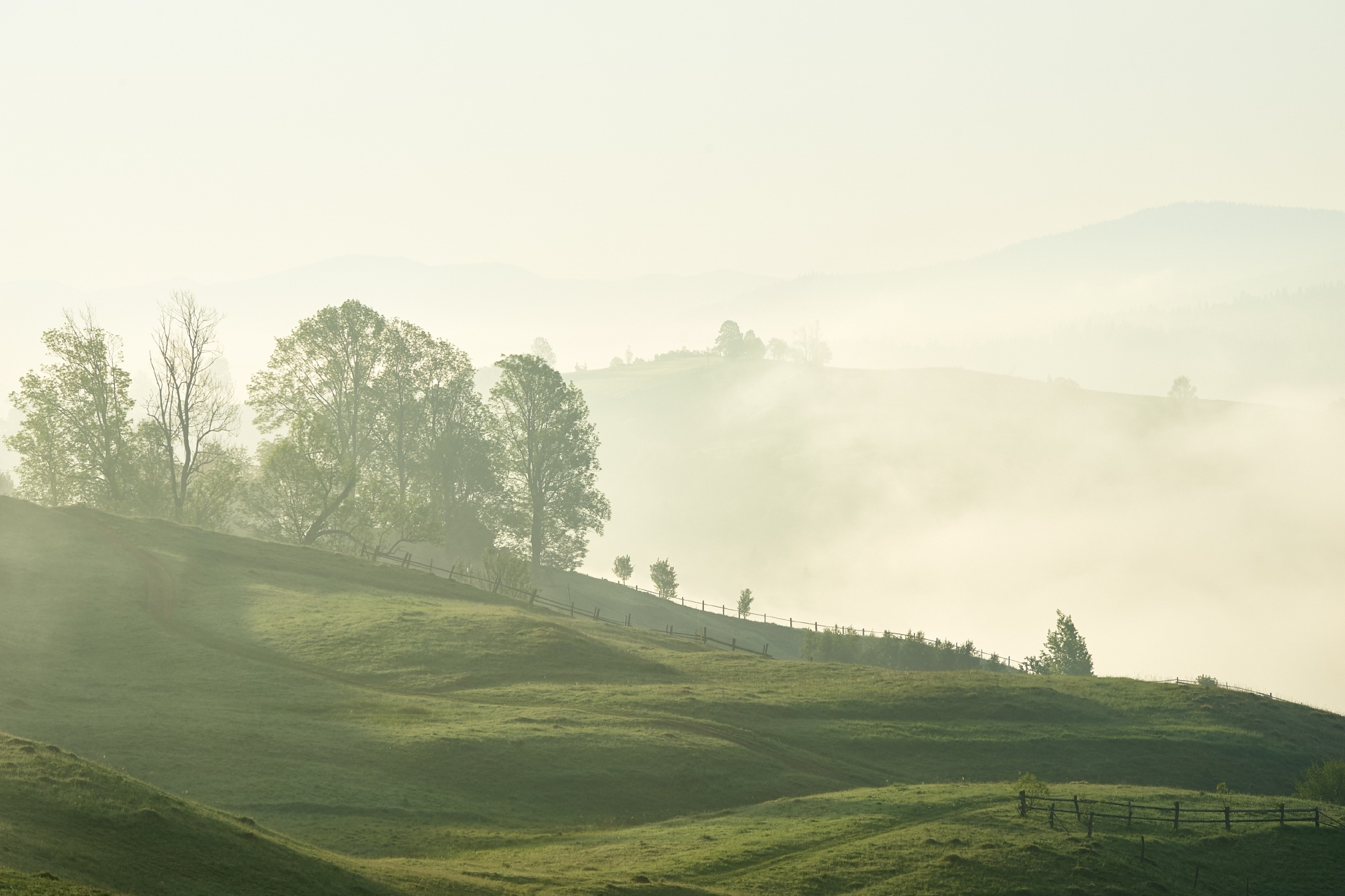 霧の朝のカルパティア山脈