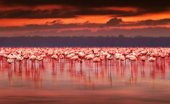美しい夕焼けと湖のフラミンゴ アフリカの風景