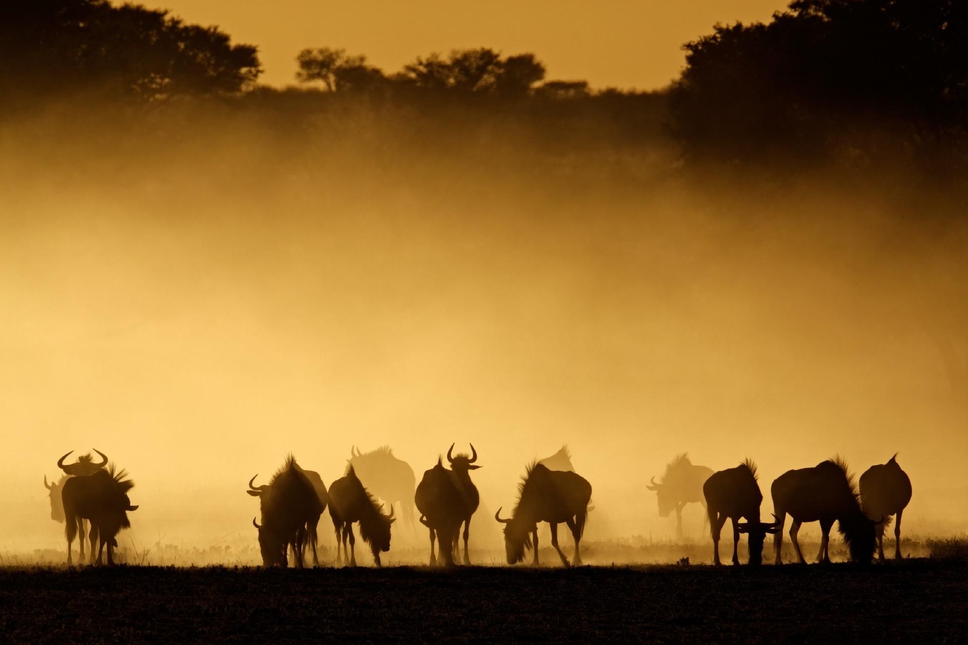 日の出のカラハリ砂漠の風景