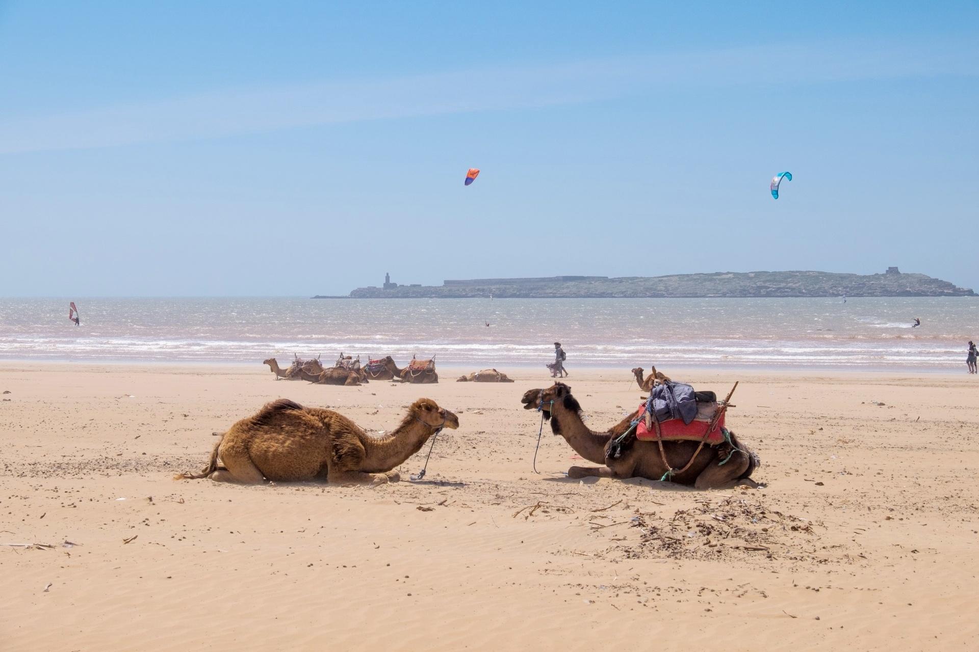 風の都市 エッサウィラの海岸の風景 モロッコの風景