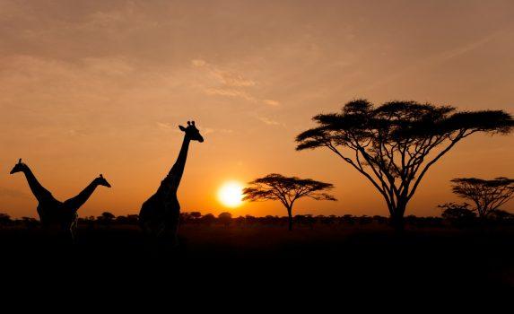 日没のセレンゲティ国立公園の風景 タンザニアの風景