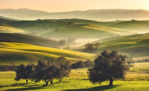 トスカーナの朝の風景 霧のかかる畑とオリーブの木 イタリアの風景