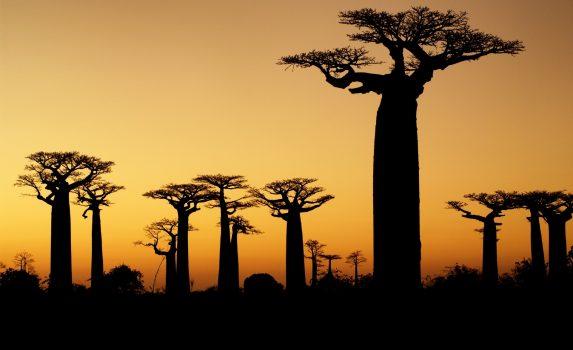夕暮れのマダガスカル バオバブの木のある風景 マダガスカルの風景