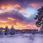 冬の夜明けの森の風景 雪と朝焼けの空