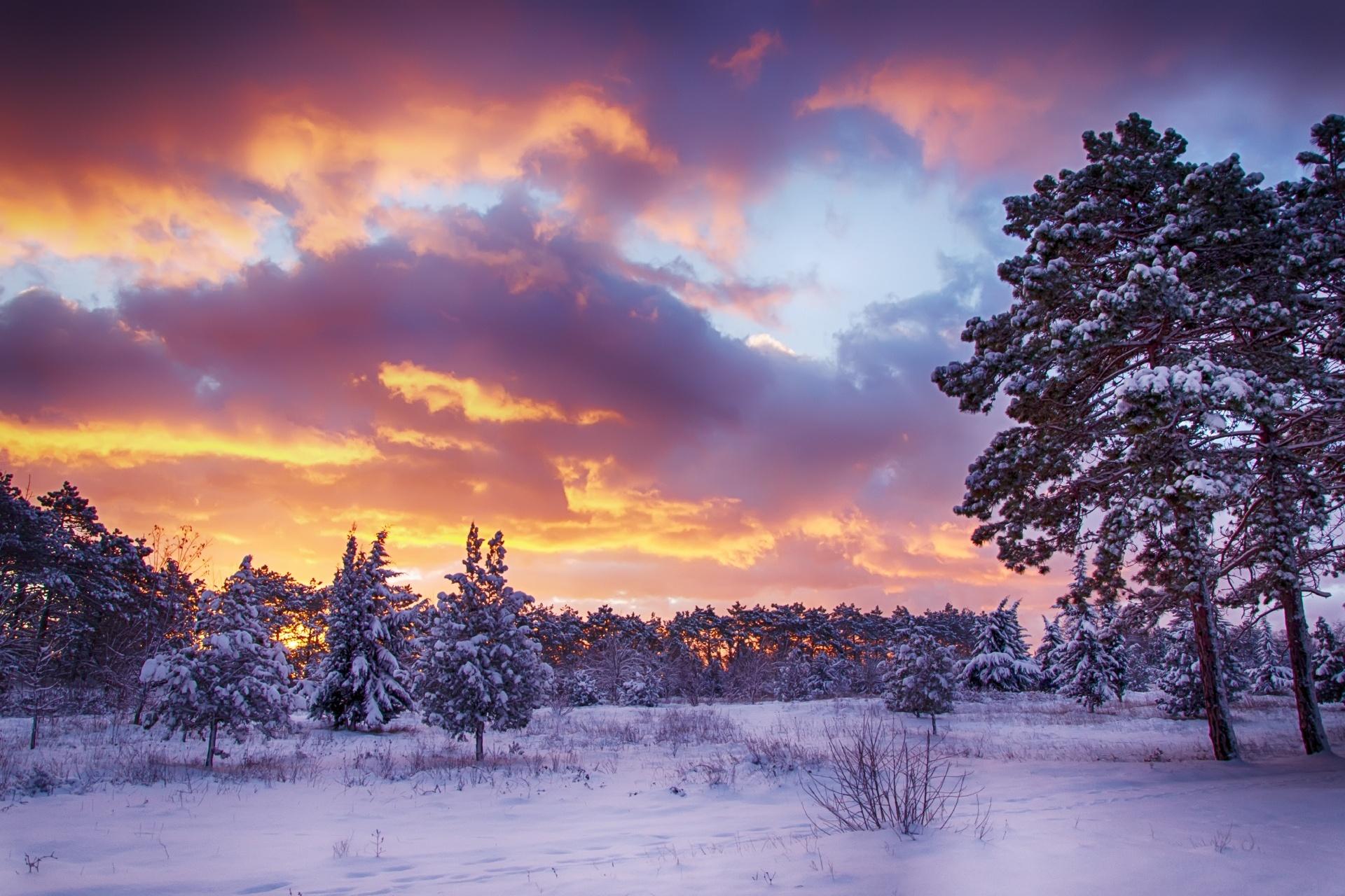 冬の夜明けの風景 朝焼けの空と森の風景