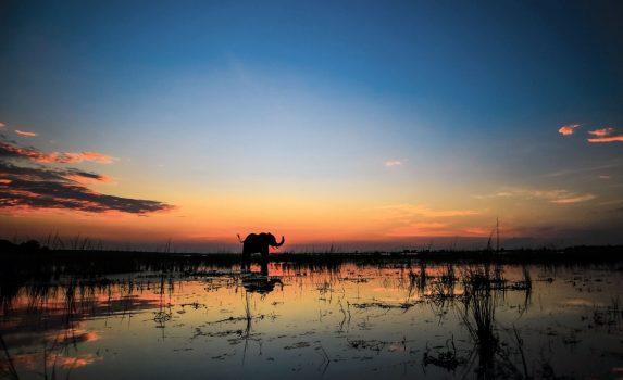夕暮れの川の中に立つアフリカ象