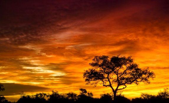 南アフリカ 日の出のクルーガー国立公園 アフリカの風景