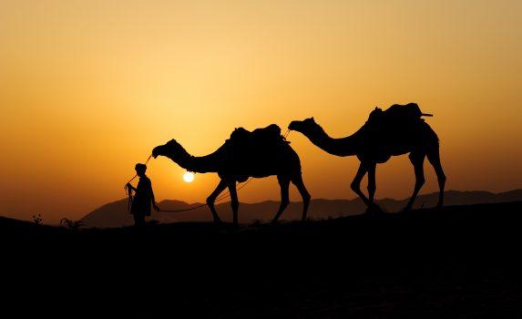 砂丘を行くラクダと夕日 インドの風景