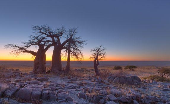 バオバブの木 日の出前のクブ島の風景 ボツワナの風景