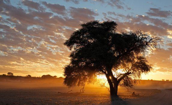 カラハリ砂漠の夕暮れ 南アフリカの風景