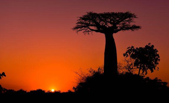 バオバブの木と夕日 マダガスカル モロンダバ
