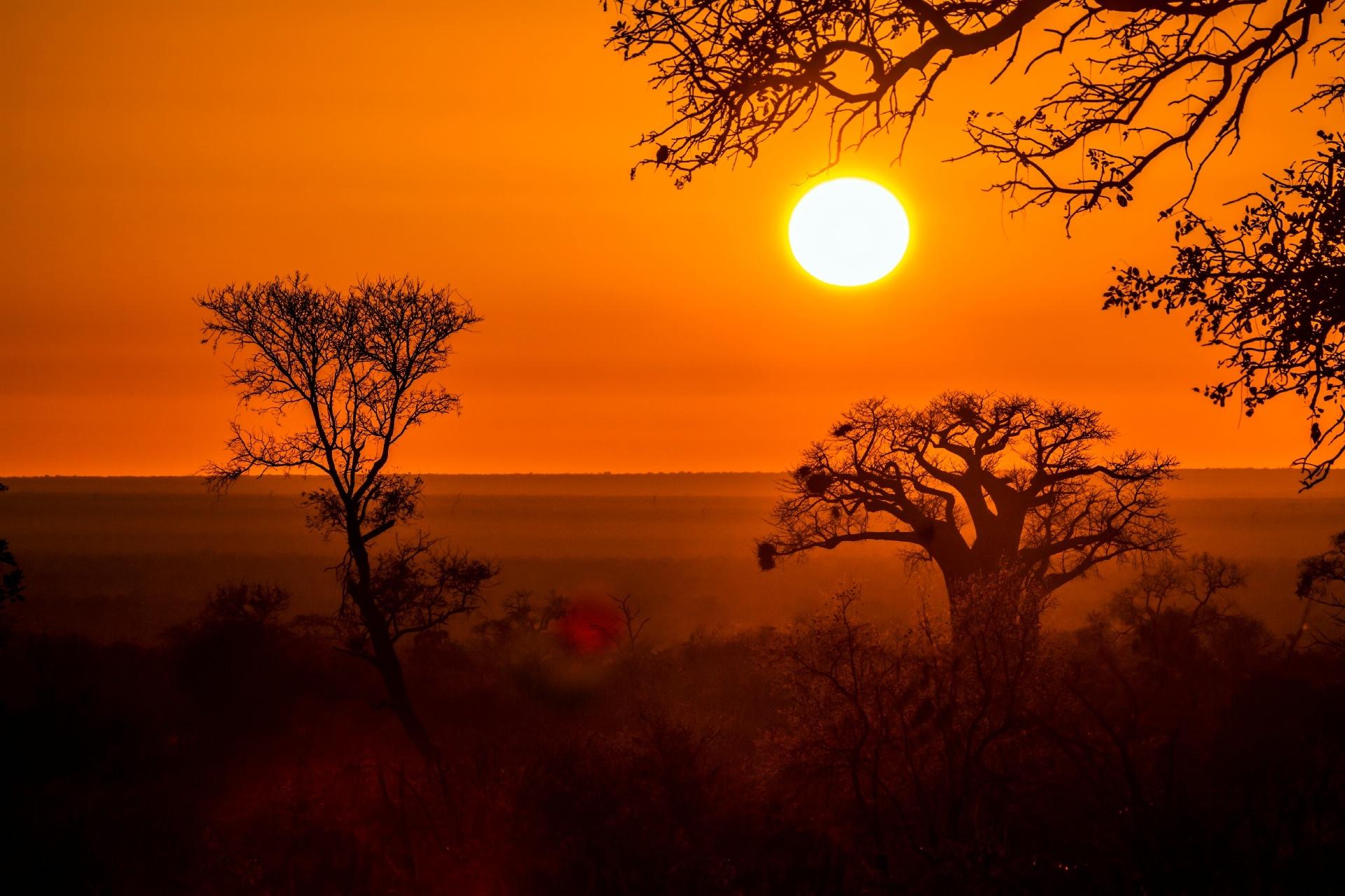 クルーガー国立公園の朝の風景 南アフリカの風景