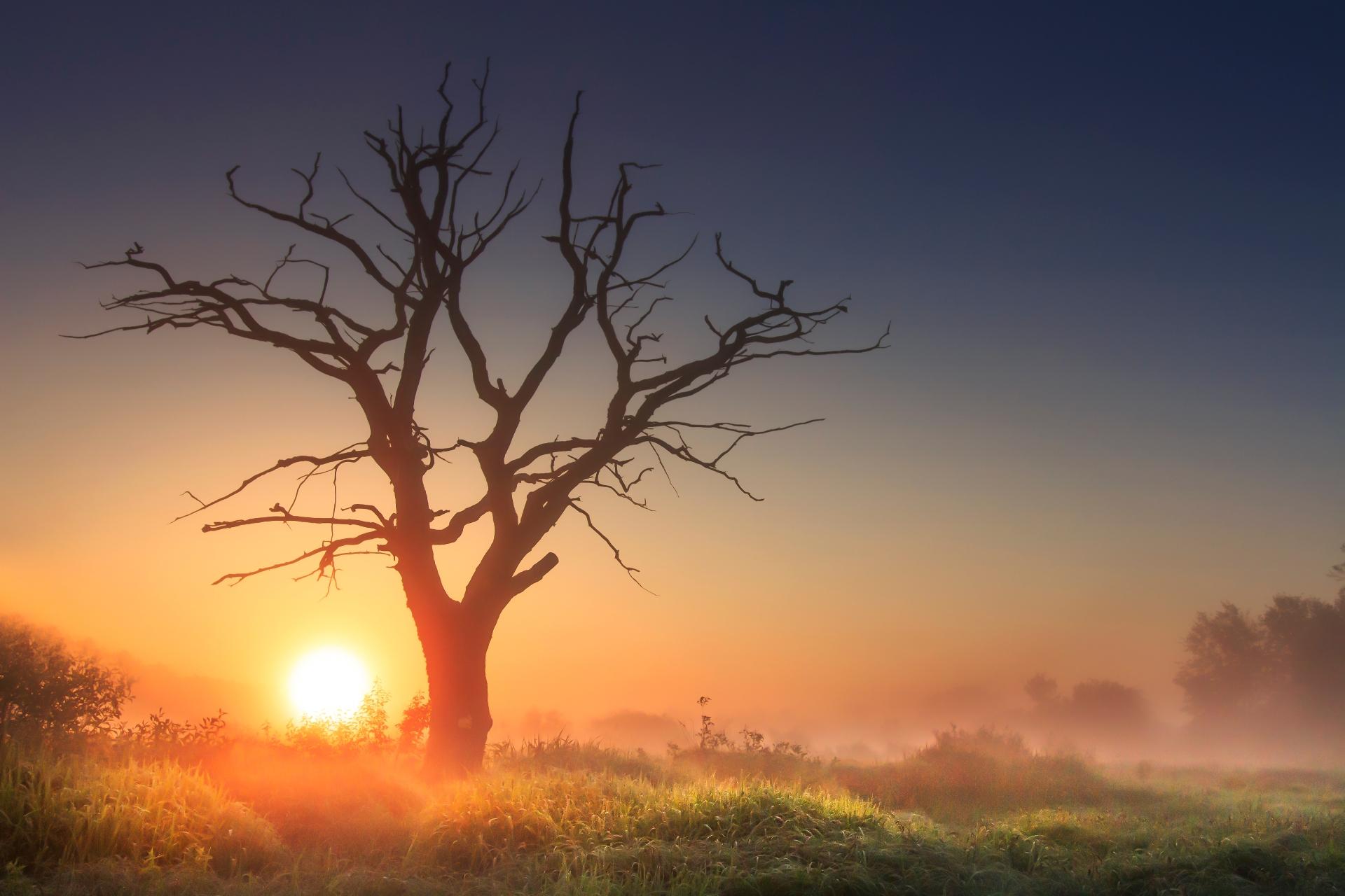 サバンナの朝の風景