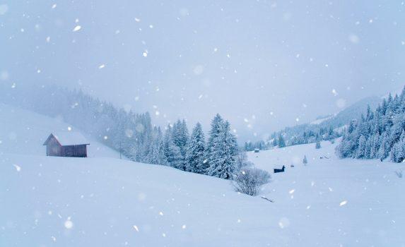 雪に覆われた松林の眺め 冬のスイスの風景
