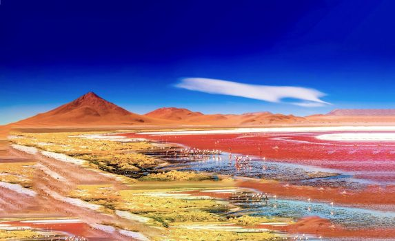 ナクル湖とピンク・フラミンゴの群れの風景 ケニアの風景