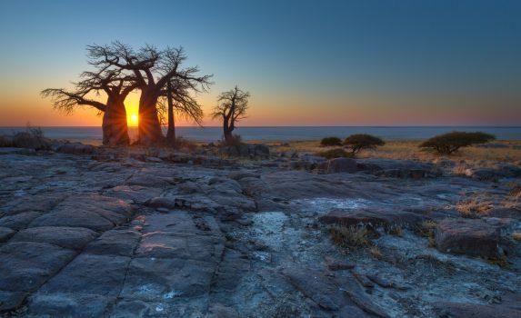 朝のマカディカディ塩湖 ボツワナの風景