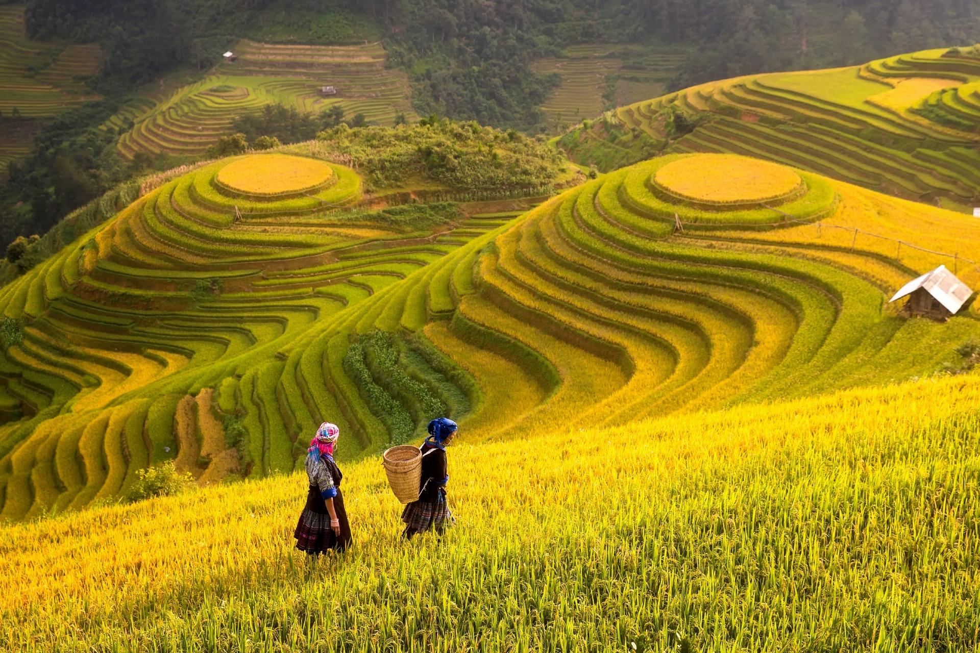 棚田の風景 ベトナムの風景