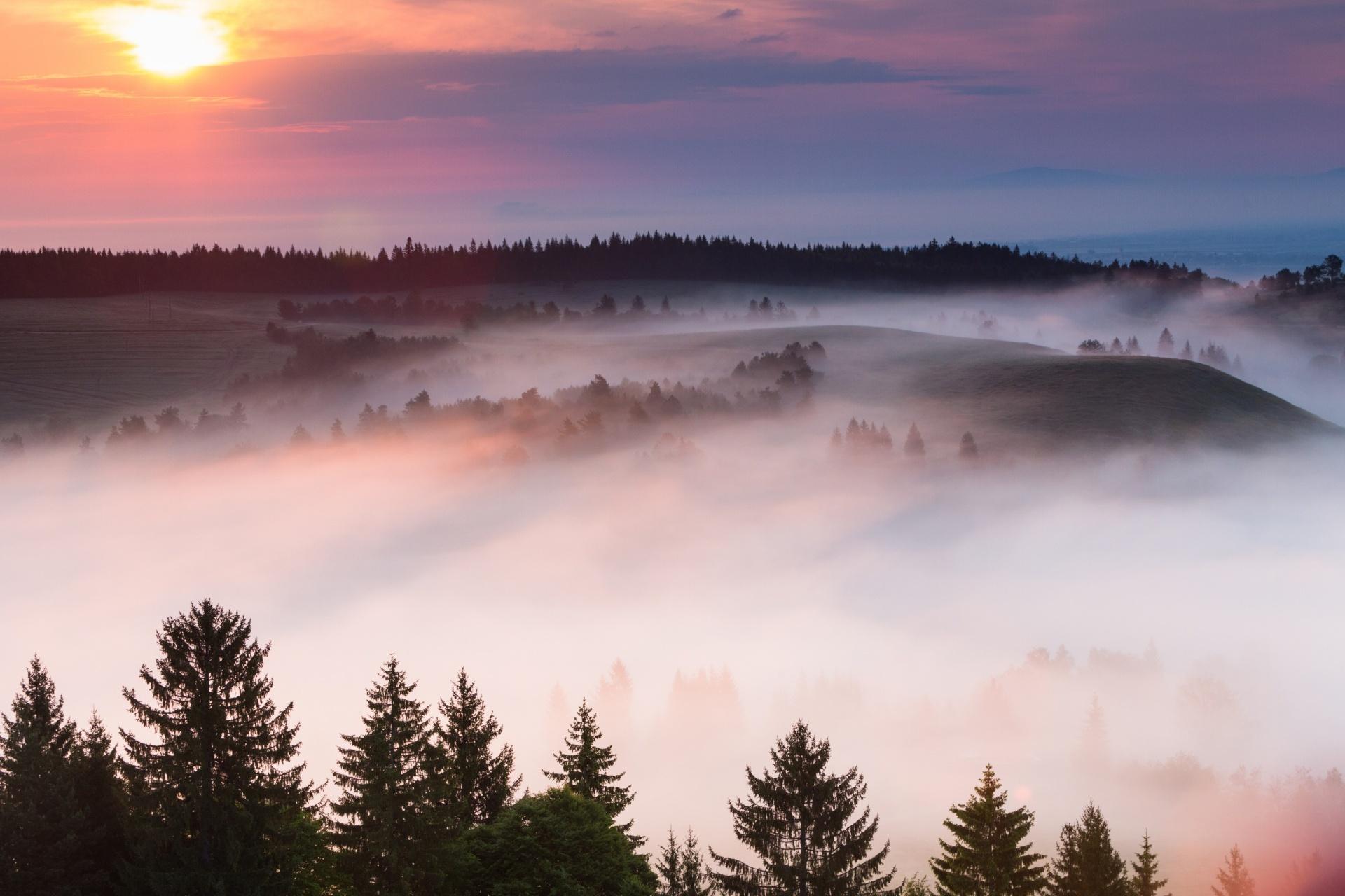 朝霧と春の牧草地の風景 ルーマニアの風景