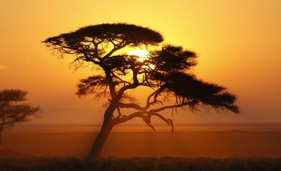日の出のエトーシャ国立公園の風景 ナミビアの風景
