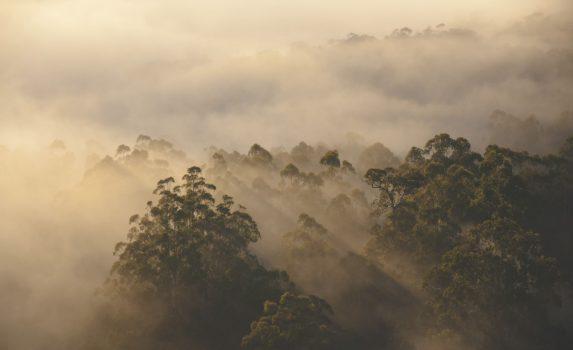 谷間の森の霧の朝の風景 オーストラリアの風景