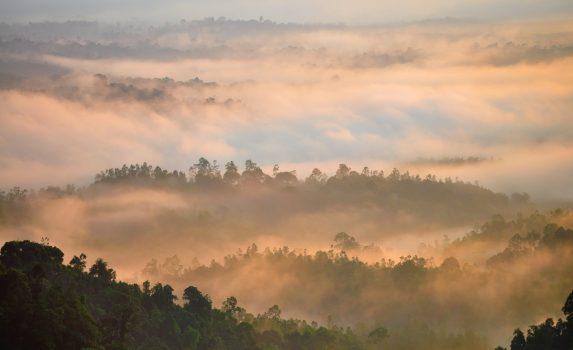 朝霧と熱帯雨林の風景 マレーシアの風景