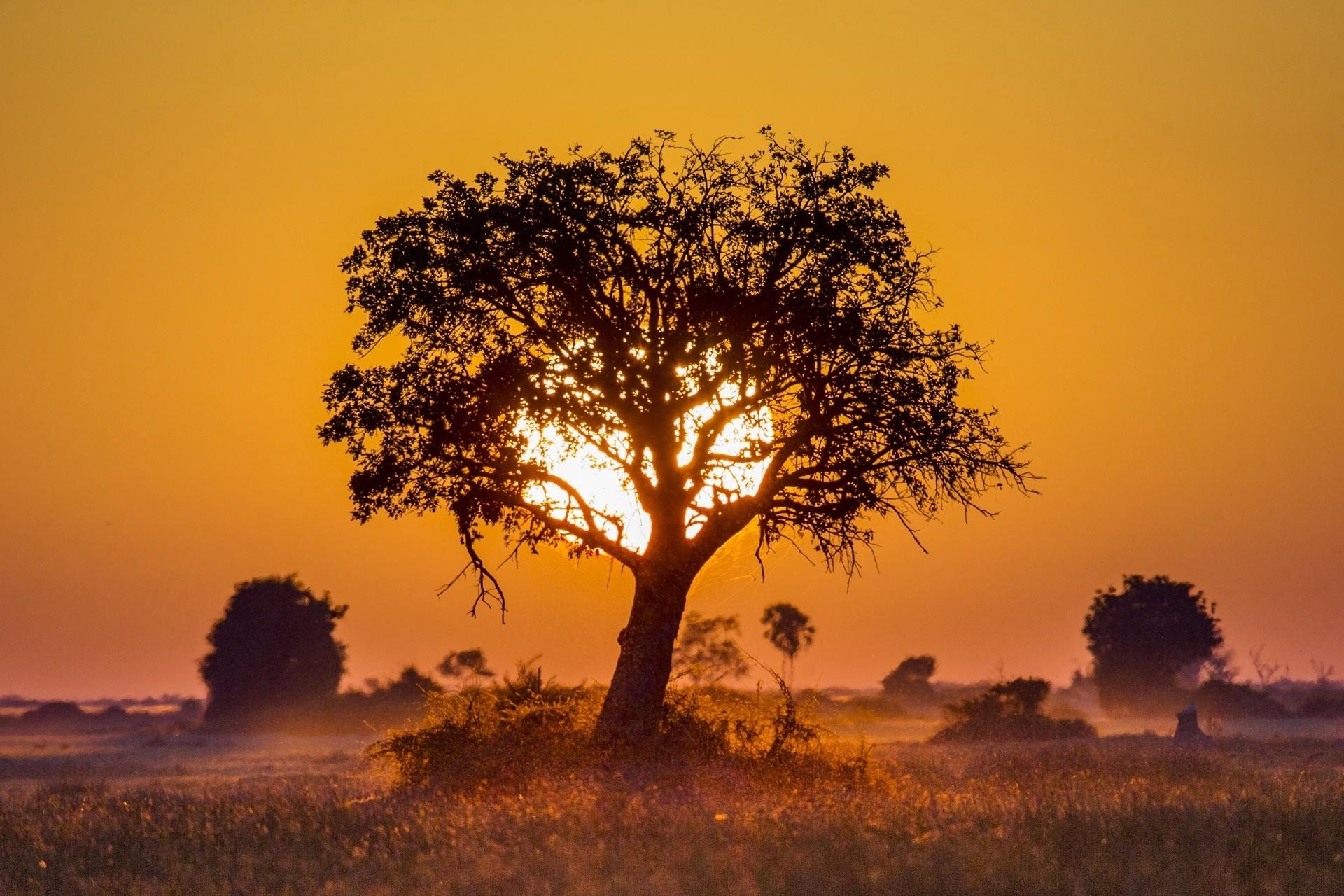 ボツワナの夕日 アフリカの風景