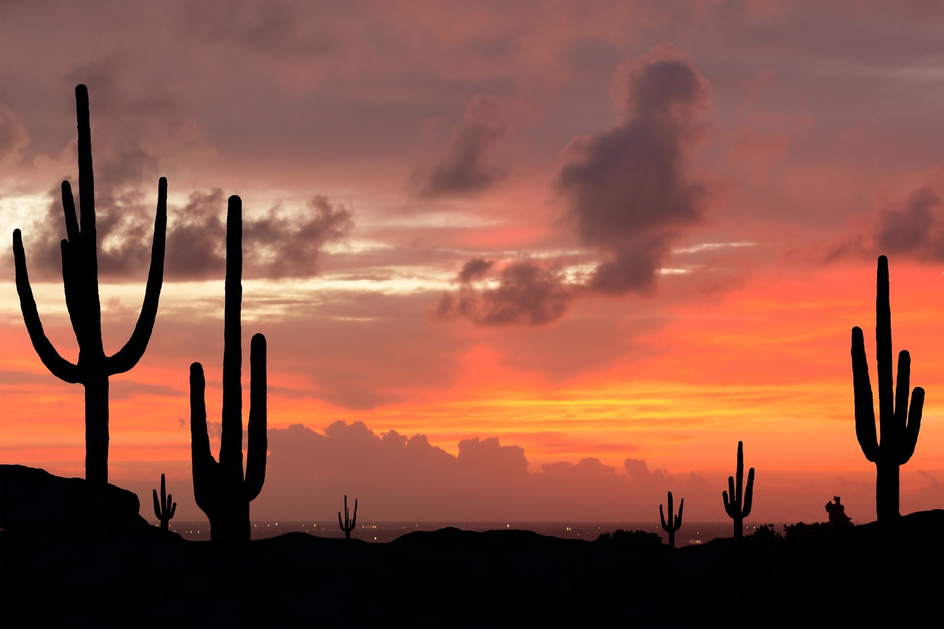 夕暮れのアリゾナ州 サワ ロサボテンのシルエット アメリカの風景