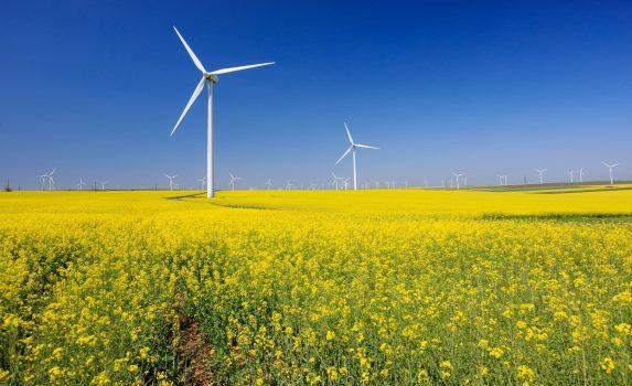 青空と風車と菜の花畑の風景 ルーマニアの風景