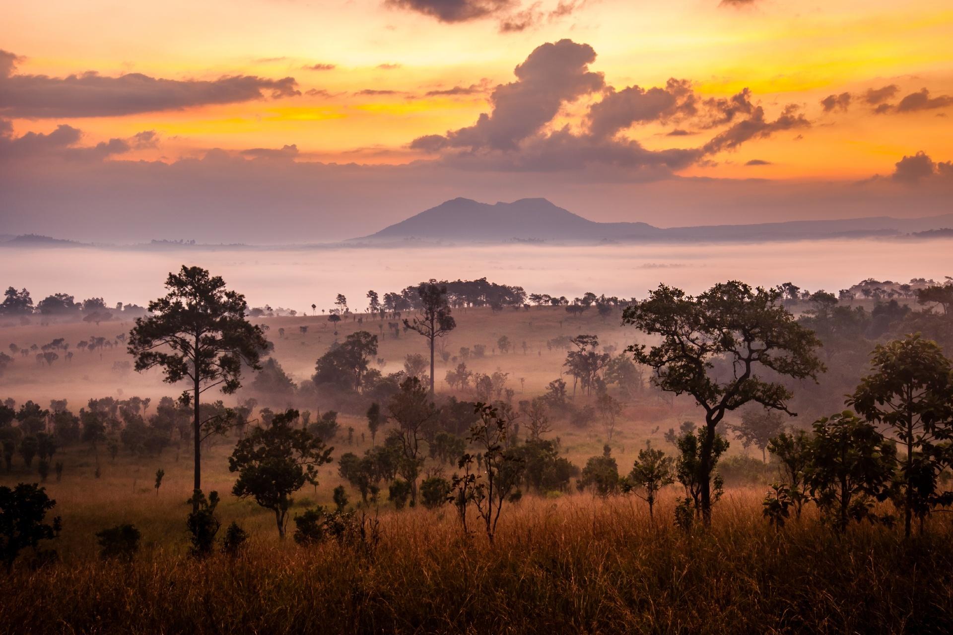 サバンナの日の出 ケニアの風景