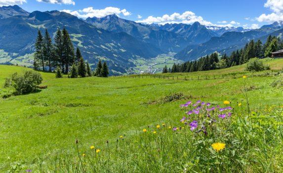 緑の牧草地とアルプスの風景 オーストリアの風景
