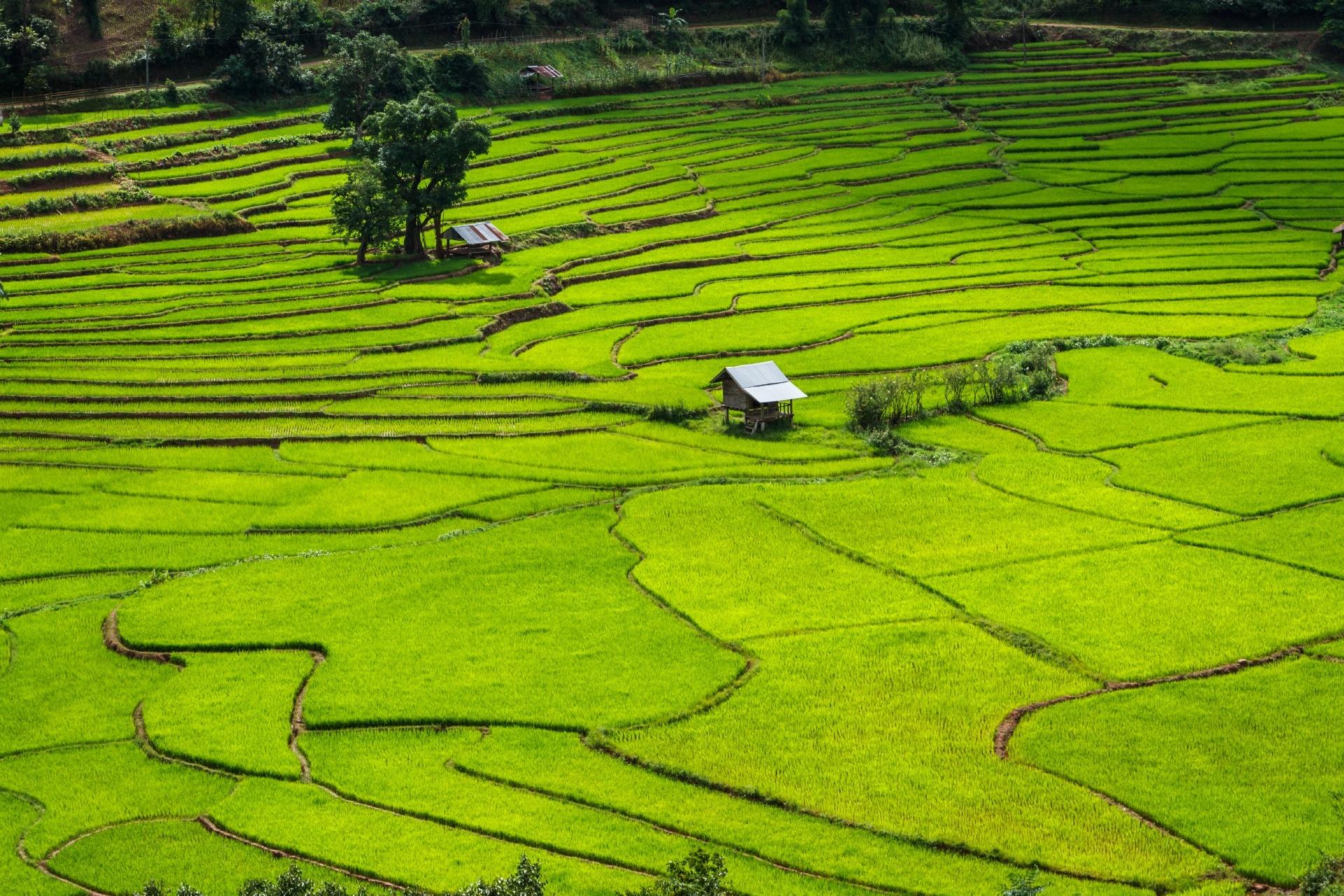 棚田の風景 タイの風景