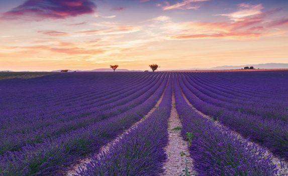 プロヴァンスのラベンダー畑 フランスの風景