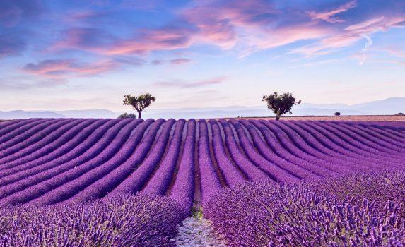ラベンダー畑と夏の夕暮れの風景 フランスの風景