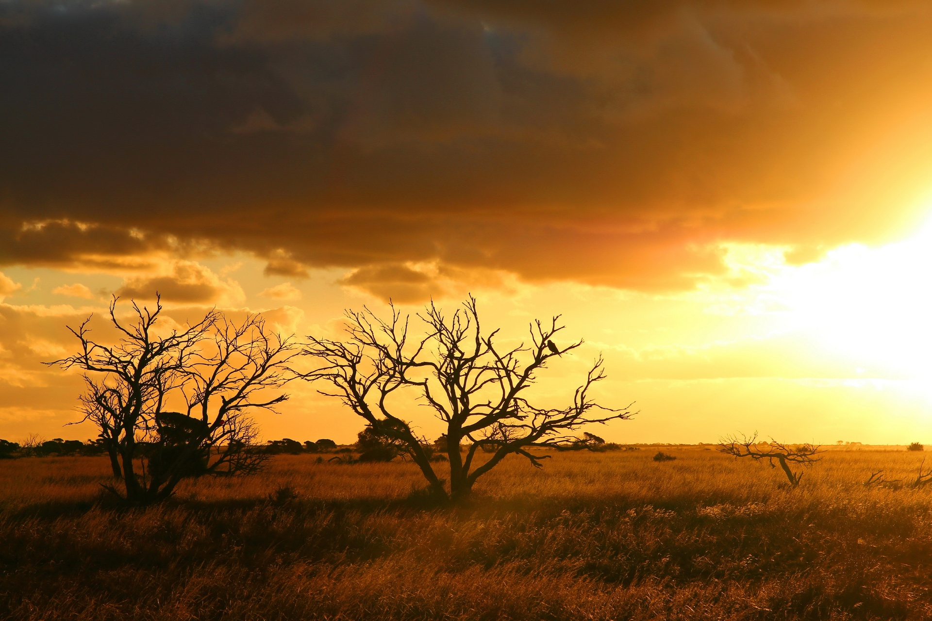 ナラボー平原の風景 オーストラリアの風景