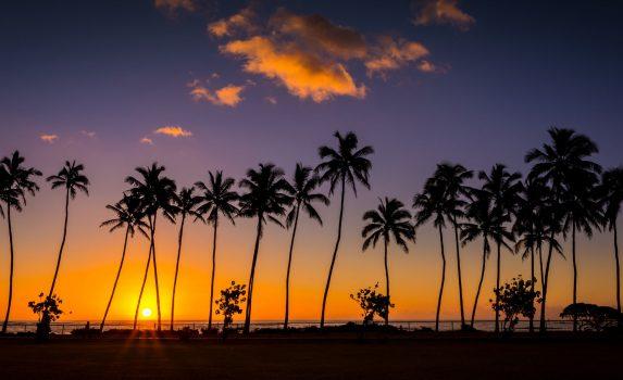 ヤシの木と日の出の空 ハワイの風景