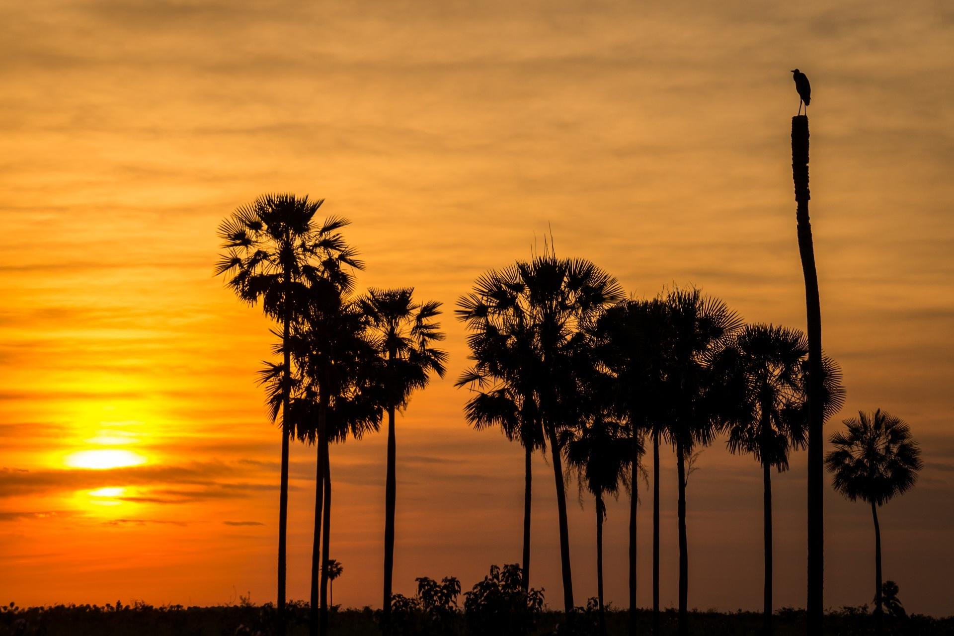 夕暮れのパンタナルの風景 パラグアイの風景