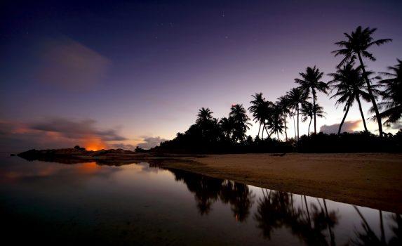 ヤシの木と夜空 モルディブの風景