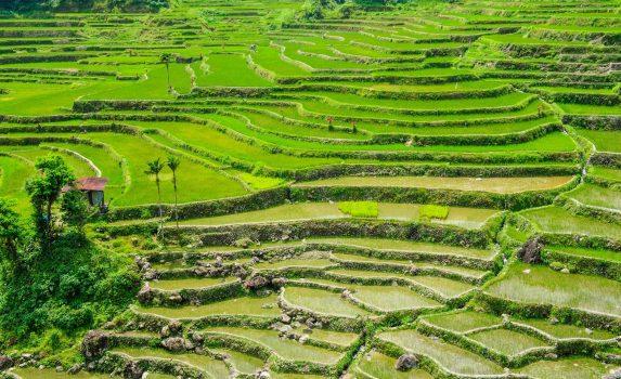 ハパオ棚田の風景 フィリピンの風景