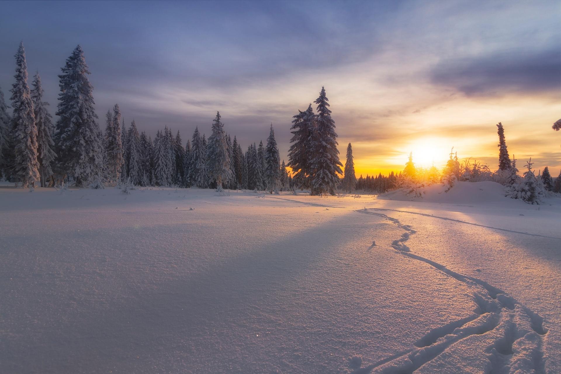 夕暮れの雪原