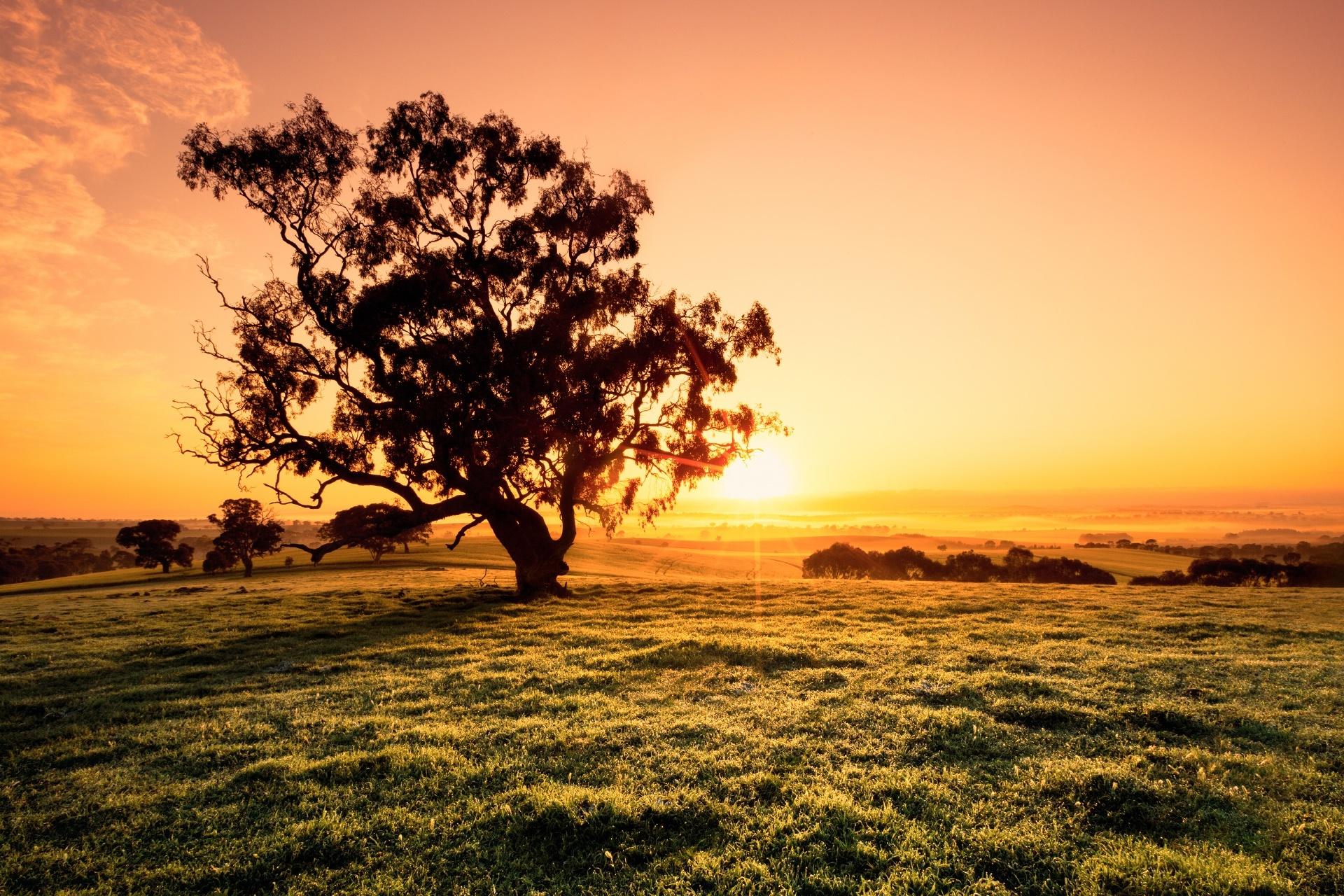 朝のクレア・バレー オーストラリアの風景