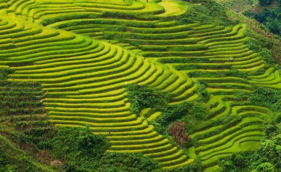 ラオカイ省の美しい棚田 ベトナムの風景