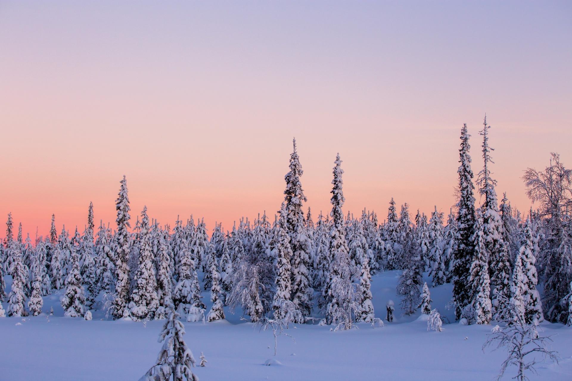 冬の夕暮れのラップランドの風景 フィンランドの風景