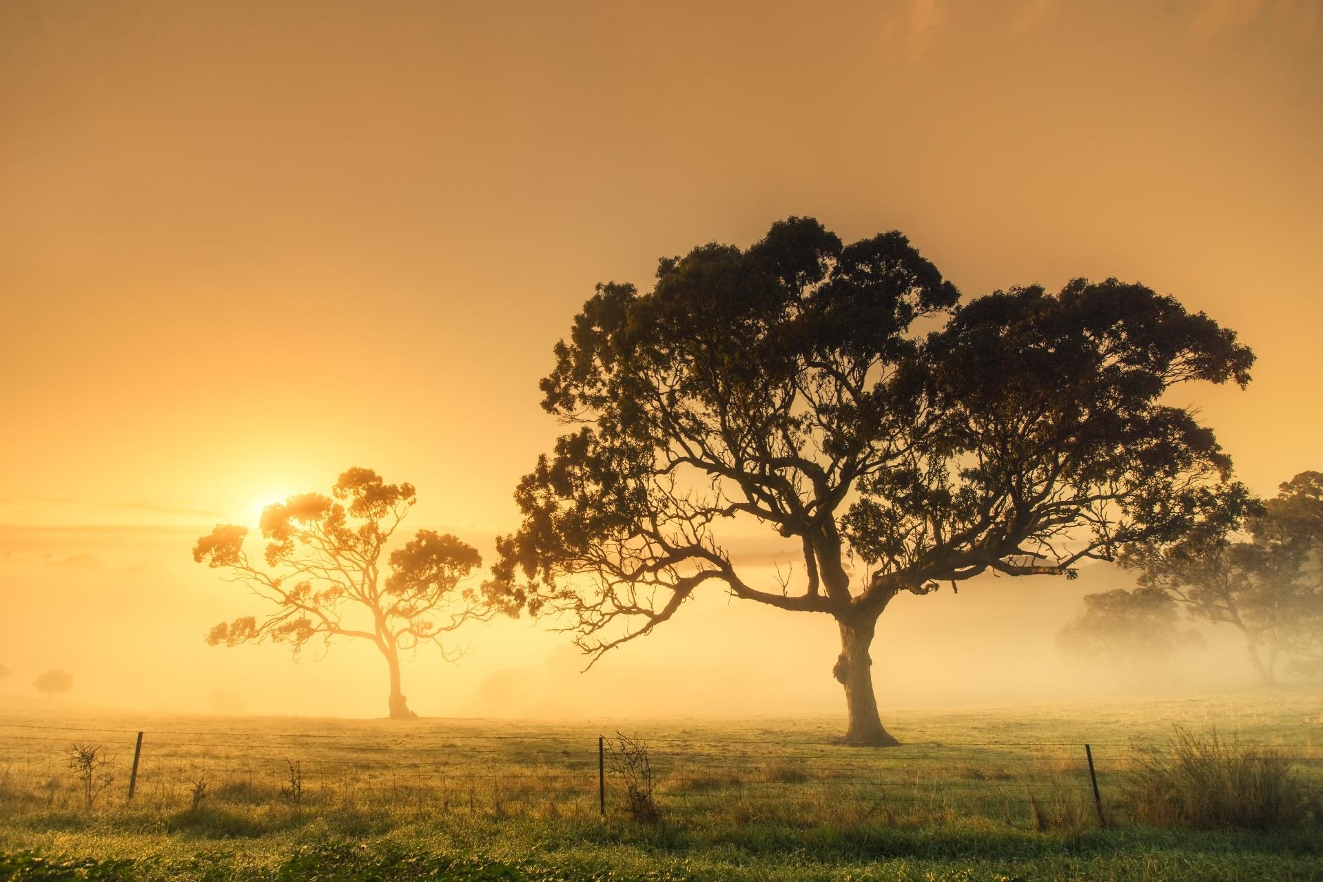 霧の朝 オーストラリアの風景