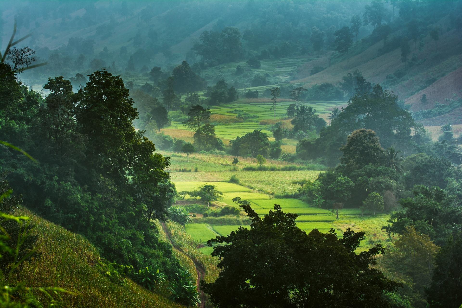 タイの田園風景 タイの風景