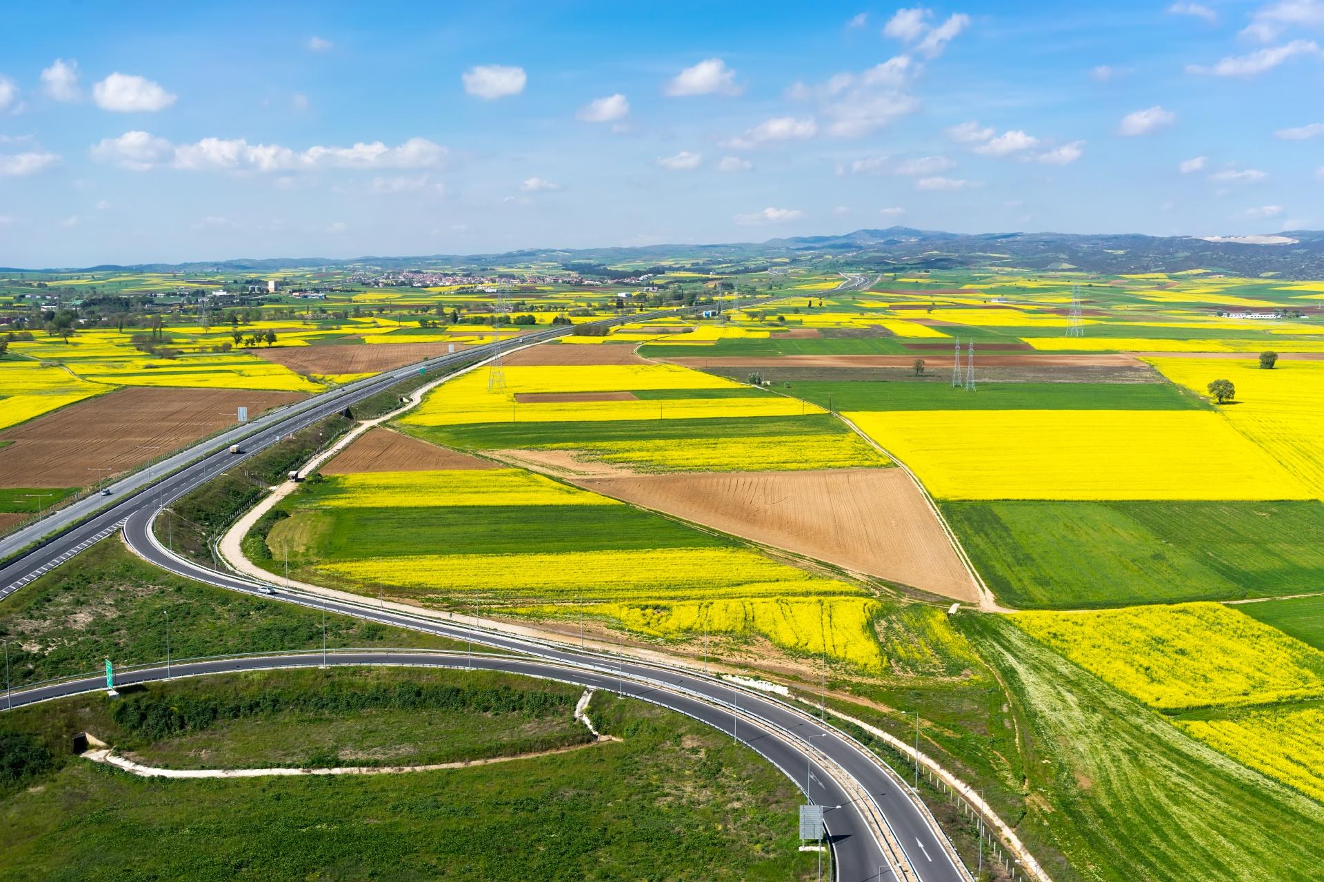 ギリシャ北部の田園風景 菜の花と道 ギリシャの風景