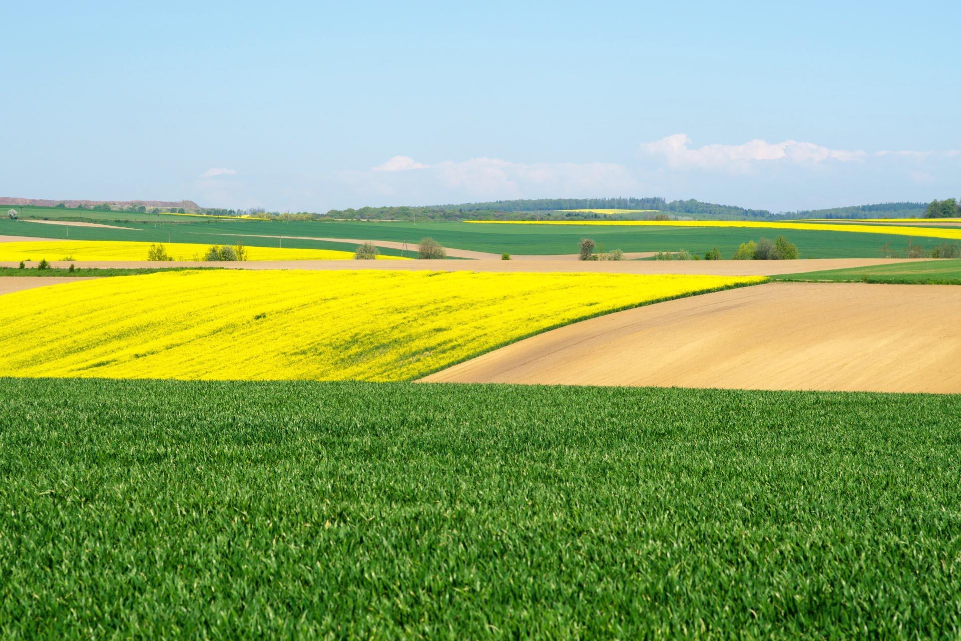 菜の花と春の畑の風景 春のポーランドの風景